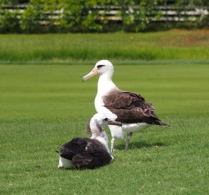 Fairway Chick and Mom