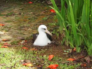 Blu234 on leafy nest